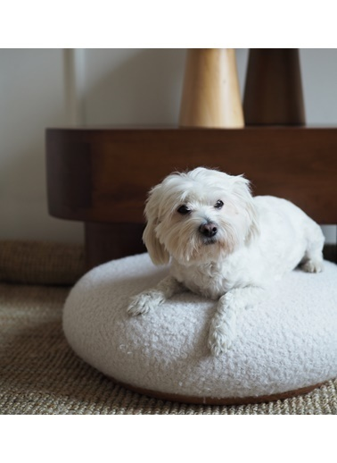 Tucas Home Tuca's Teddy Pet Puf Renkli